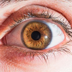 Image for Diabetes and Eye Problems